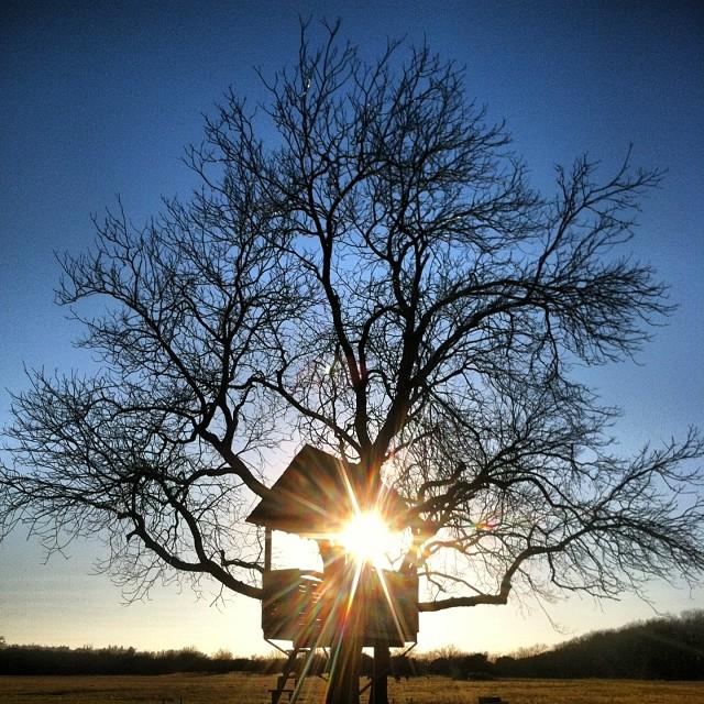 Treehouses_12