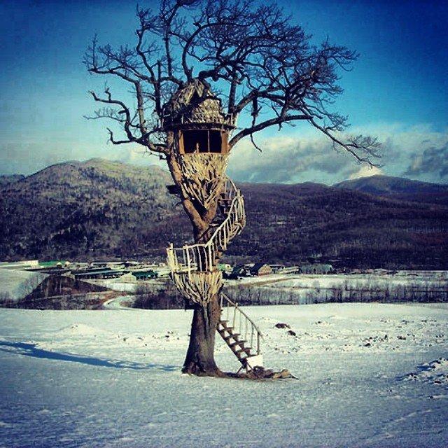 Treehouses_06