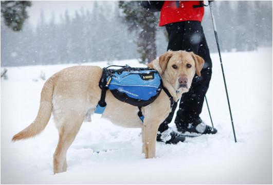 dog-pack.jpg