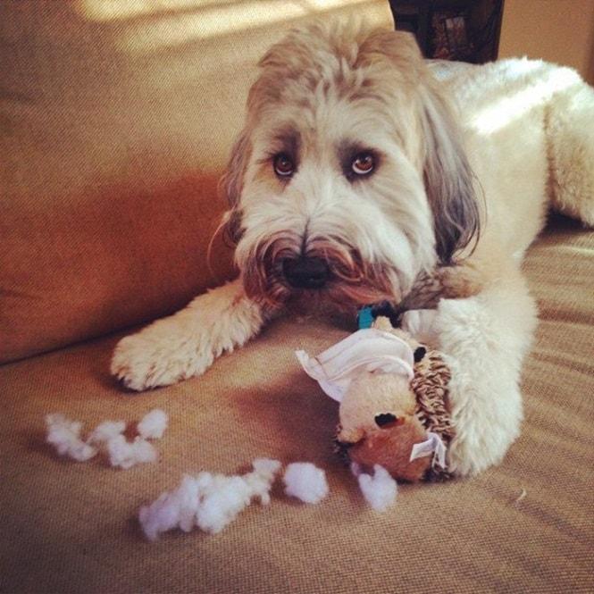 1488897484_707_26-cachorros-envergonhados-por-que-sabem-que-tem-culpa-no-cartorio-min.jpg